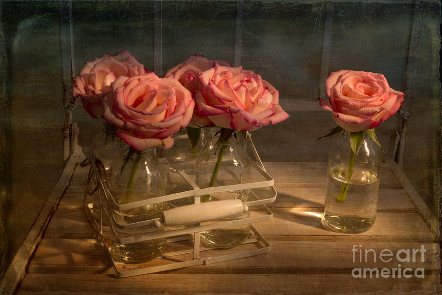 Roses Photograph - Milk Bottle Roses by Ann Garrett