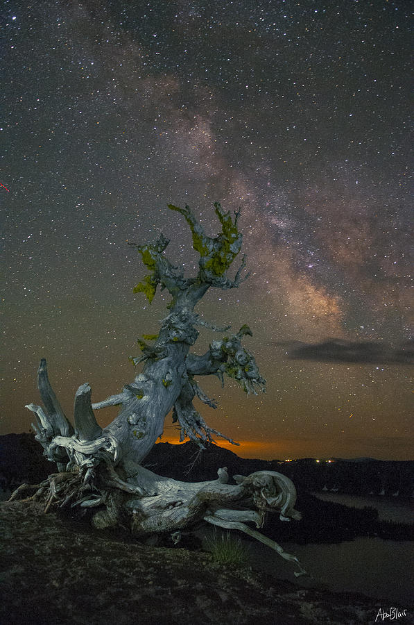 Milky Way Photograph - Milky Way Tree by Abe Blair