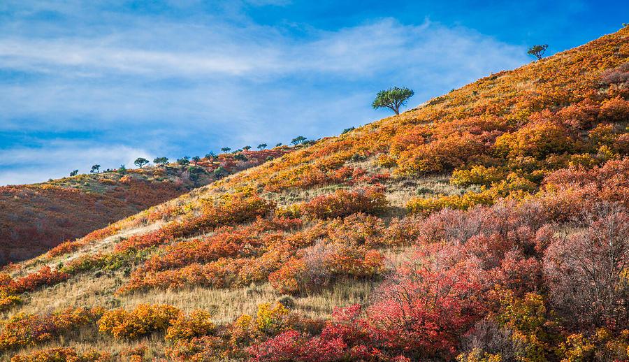 Mountain Photograph - Millers Ridge In Autumn by TiiLT Imagewerks