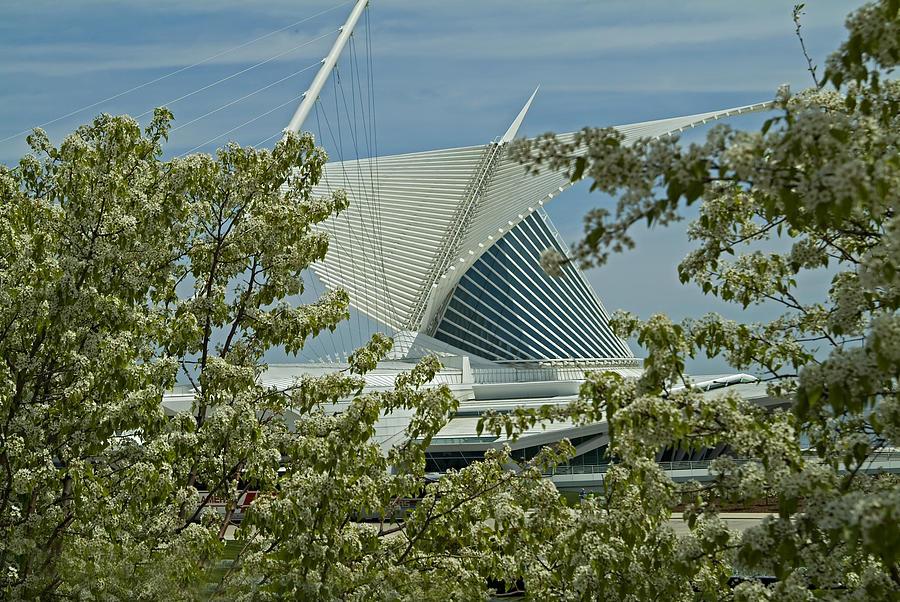 Milwaukee Art Museum Photograph - Milwaukee Art Museum Through Flowered Trees by Devinder Sangha