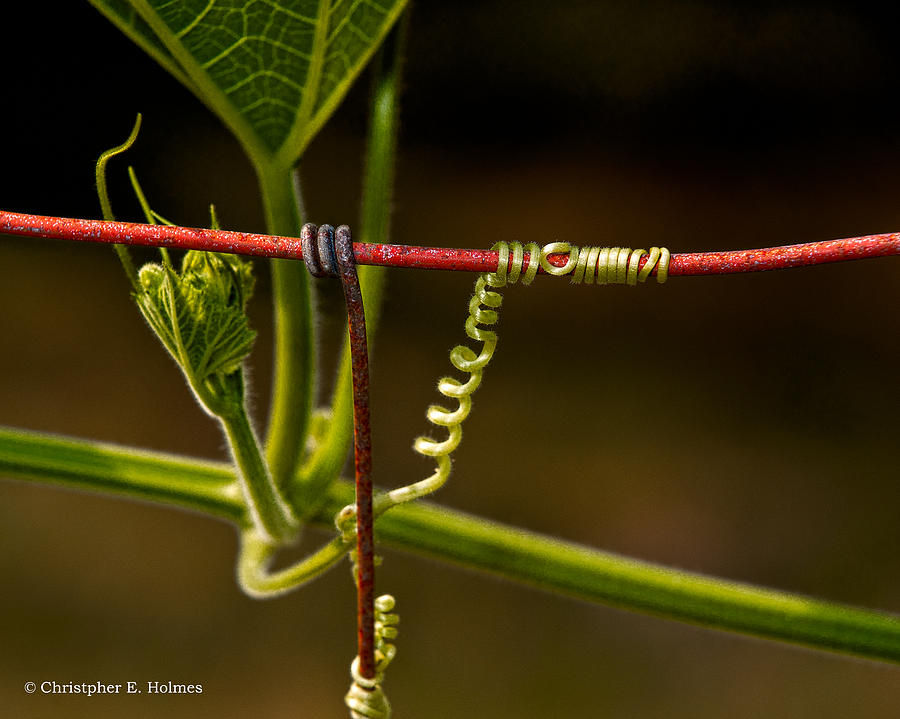 Wire Photograph - Mimic by Christopher Holmes