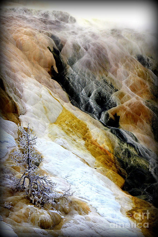 Mammoth Hot Springs Photograph - Minerals And Stream by C Ray  Roth