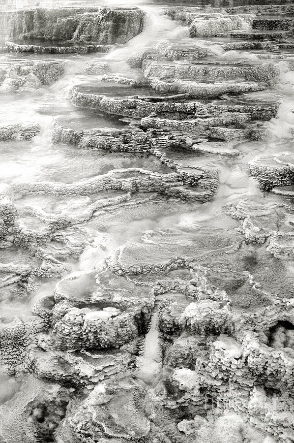 America Photograph - Minerva Springs In Black And White Yellowstone National Park Wyoming by Dave Welling