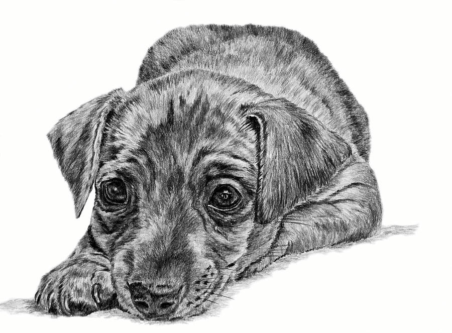 Dog Drawing - Mini Pin by Pencil Paws