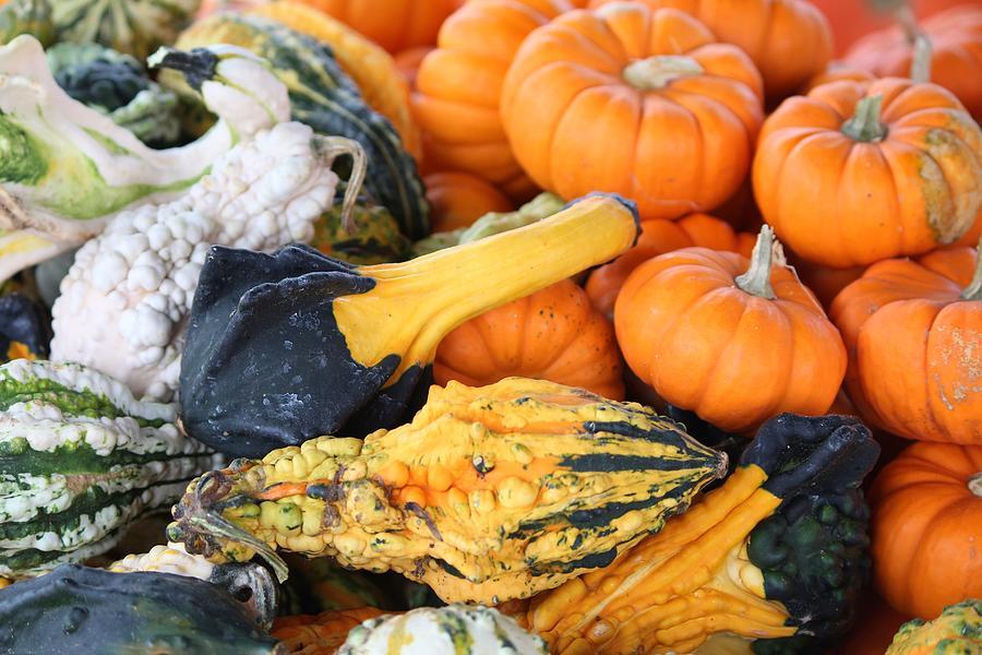 Mini Photograph - Mini Pumpkins And Gourds by Cynthia Guinn
