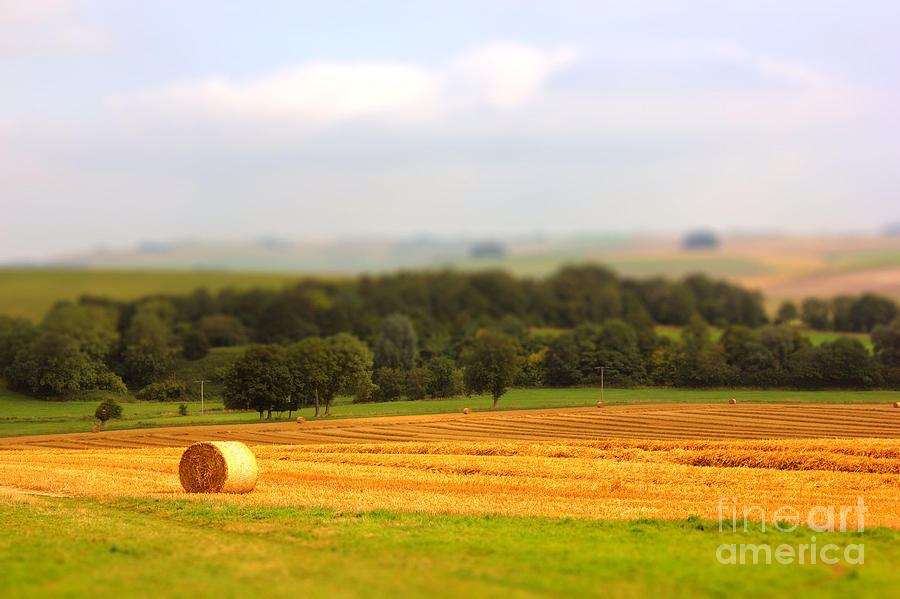 Countryside Photograph - Miniature Countryside by Vicki Spindler