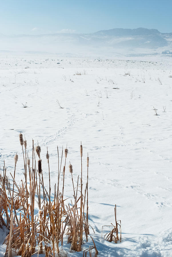 Cattail Photograph - Minimalist Cattail Prairie In Colorado by Julie Magers Soulen
