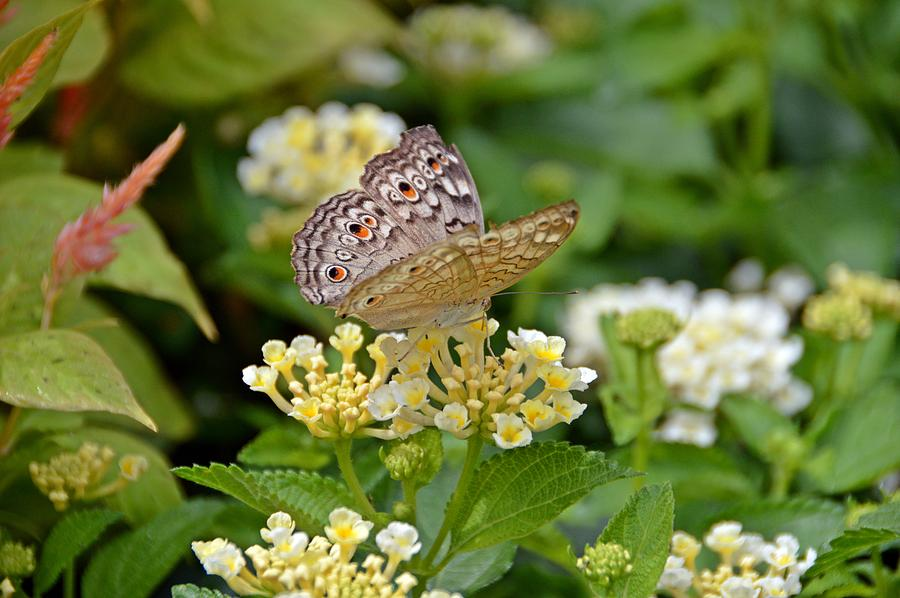 Butterfly Photograph - Mining For Gold by David Earl Johnson