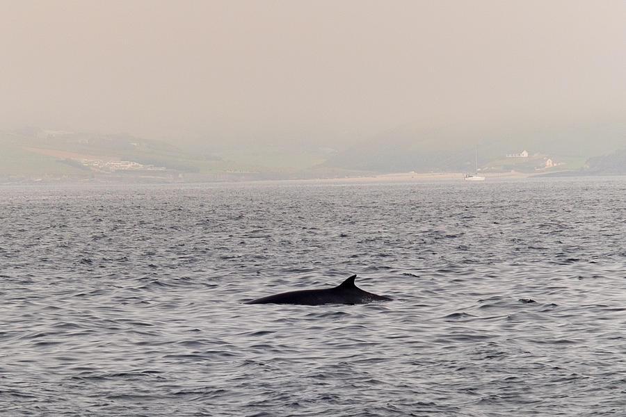 Whale Photograph - Minke Whale by Kai Bergmann