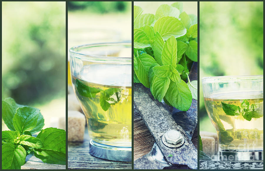 Background Photograph - Mint Tea Collage by Mythja  Photography