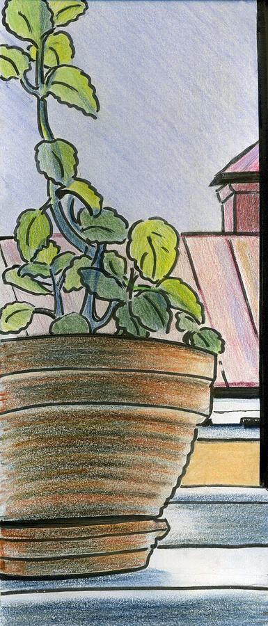Window Drawing - Mint Window by Lelia Sorokina