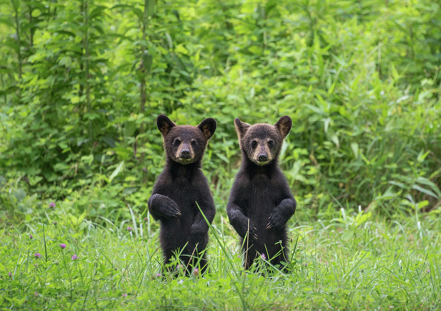 Mirror Image Cubs Photograph by W. Drew Senter, Longleaf Photography