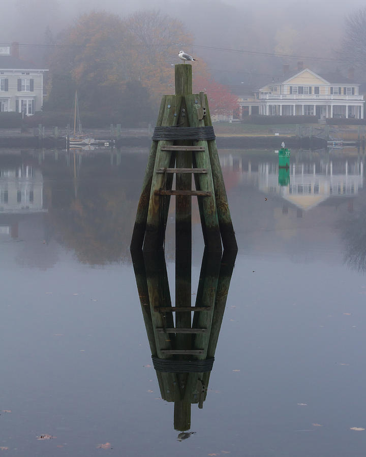 Mirror Image Photograph - Mirror Image Seagull Reflection by Kirkodd Photography Of New England
