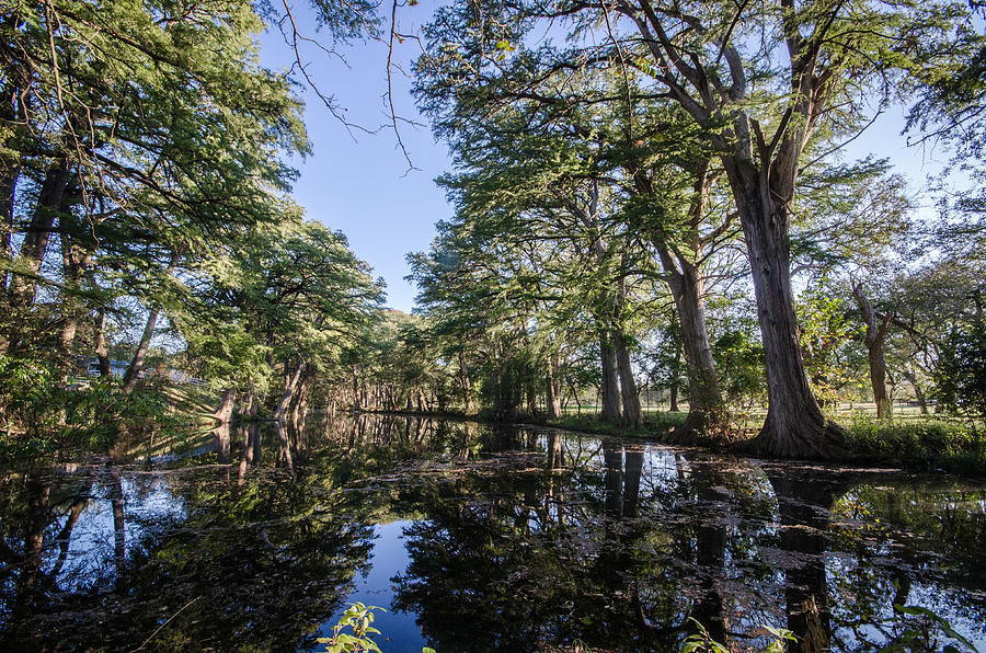 Texas Photograph - Mirror On The Frio by Jeffrey W Spencer