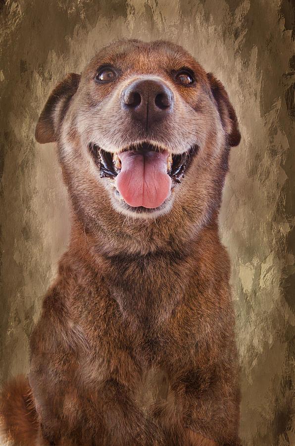 Dogs Photograph - Misha by Barbara Manis