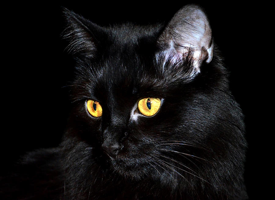 Black Cat Photograph - Miss Anastasia by Camille Lopez