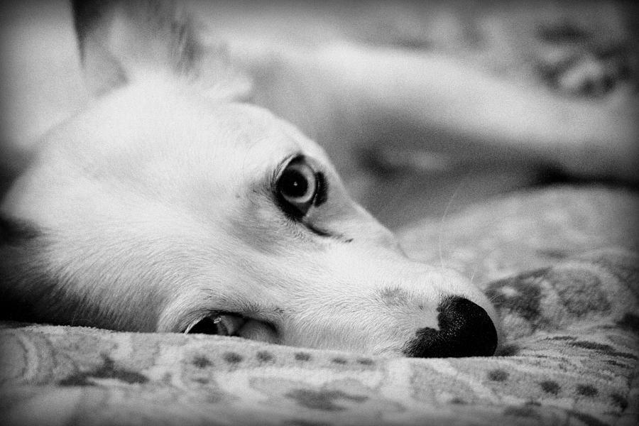Puppy Photograph - Miss Donut  by Faith Williams