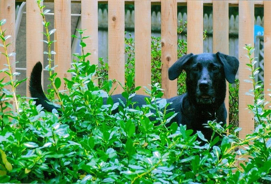 Dog Photograph - Miss You Riley by Laura Lee Zanghetti