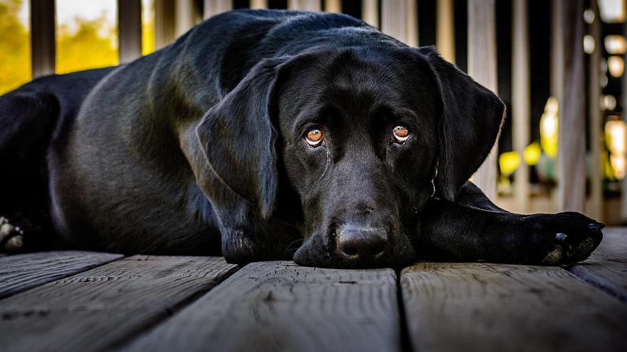 Dog Photograph - Miss You So Much by Randy Scherkenbach