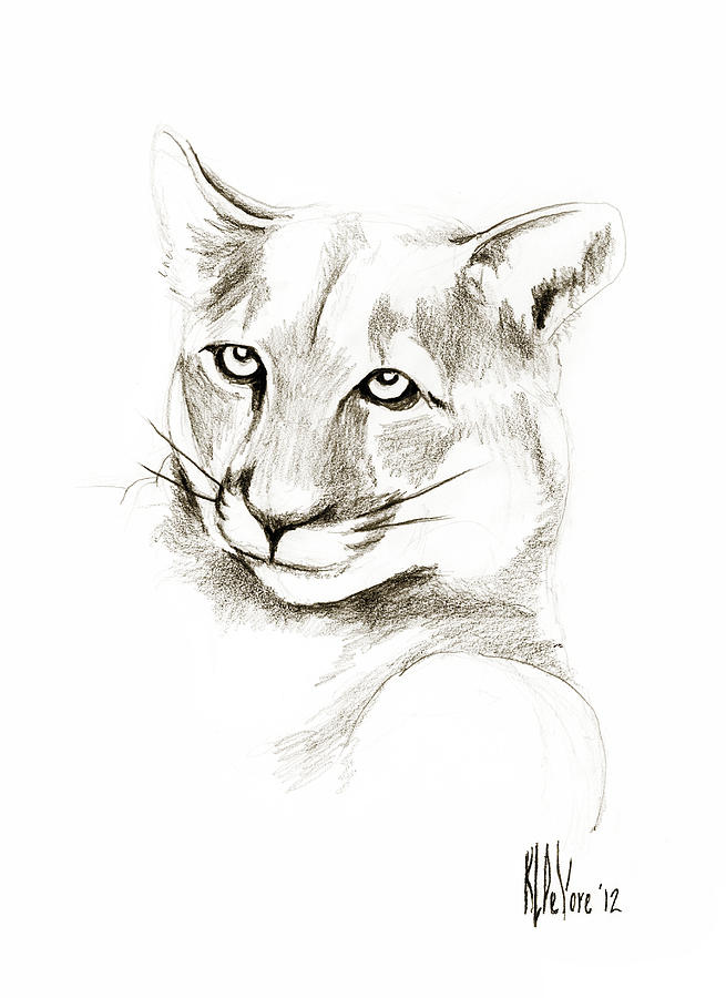 Missouri Mountain Lion Ii Drawing - Missouri Mountain Lion II by Kip DeVore