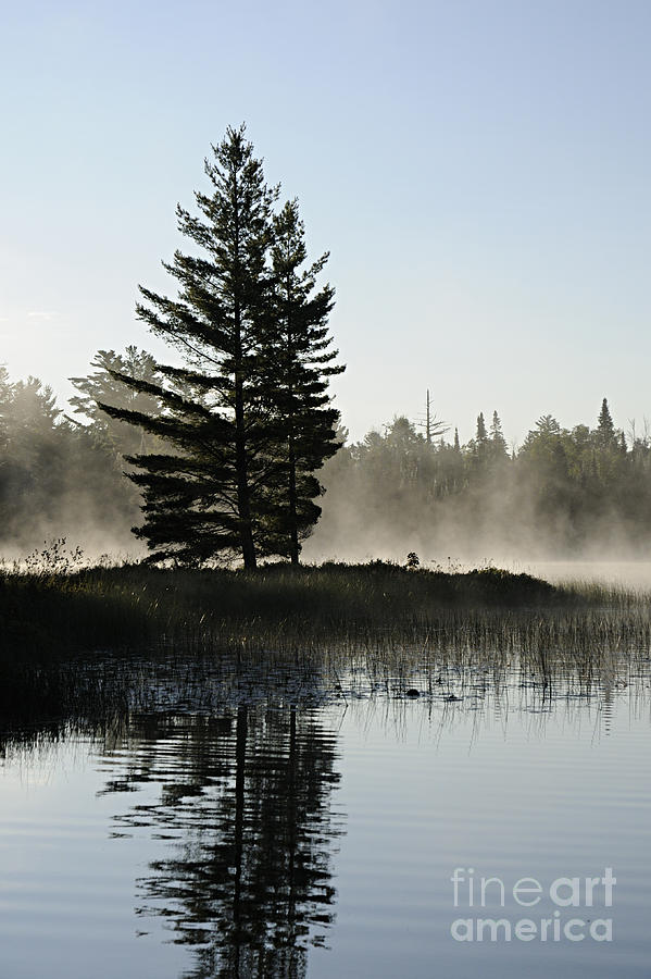 Nature Photograph - Mist And Silhouette by Larry Ricker