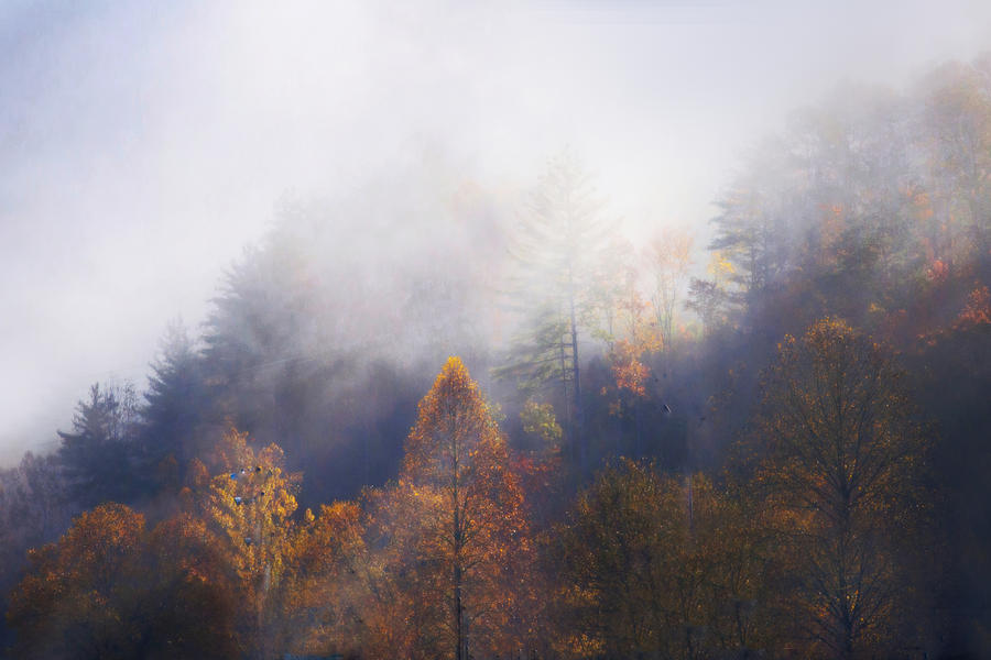 Pine Trees Photograph - Mist In Mountains by Dorothy Walker