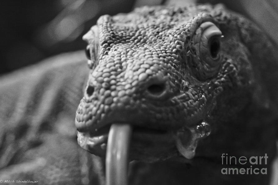 Lizard Photograph - Mister Lizard by Mitch Shindelbower