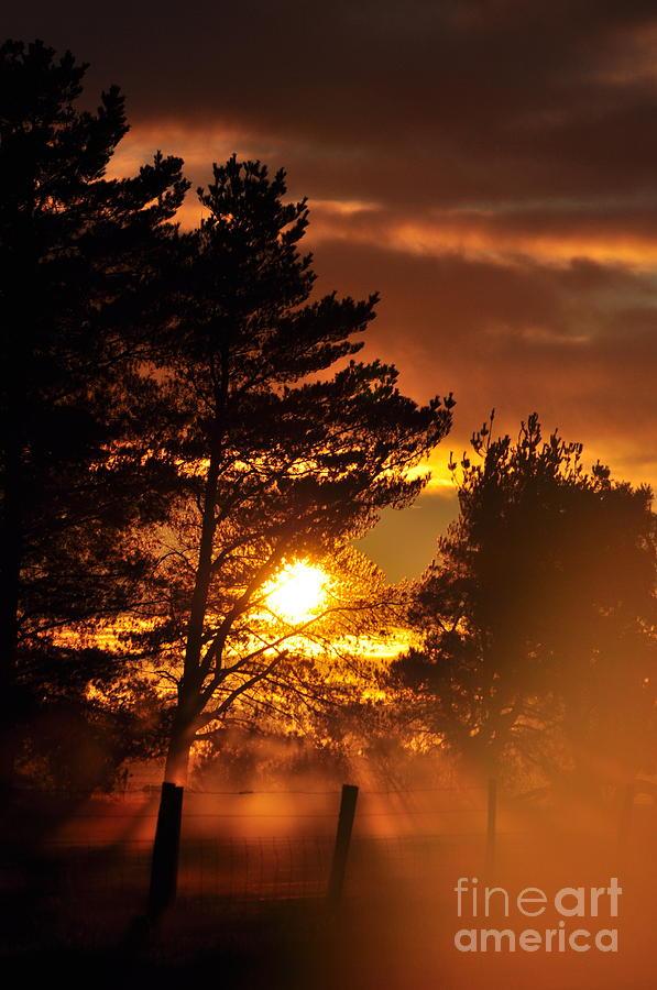 Sun Photograph - Mists of Change Sunlit Oracle Card by Coralie Plozza