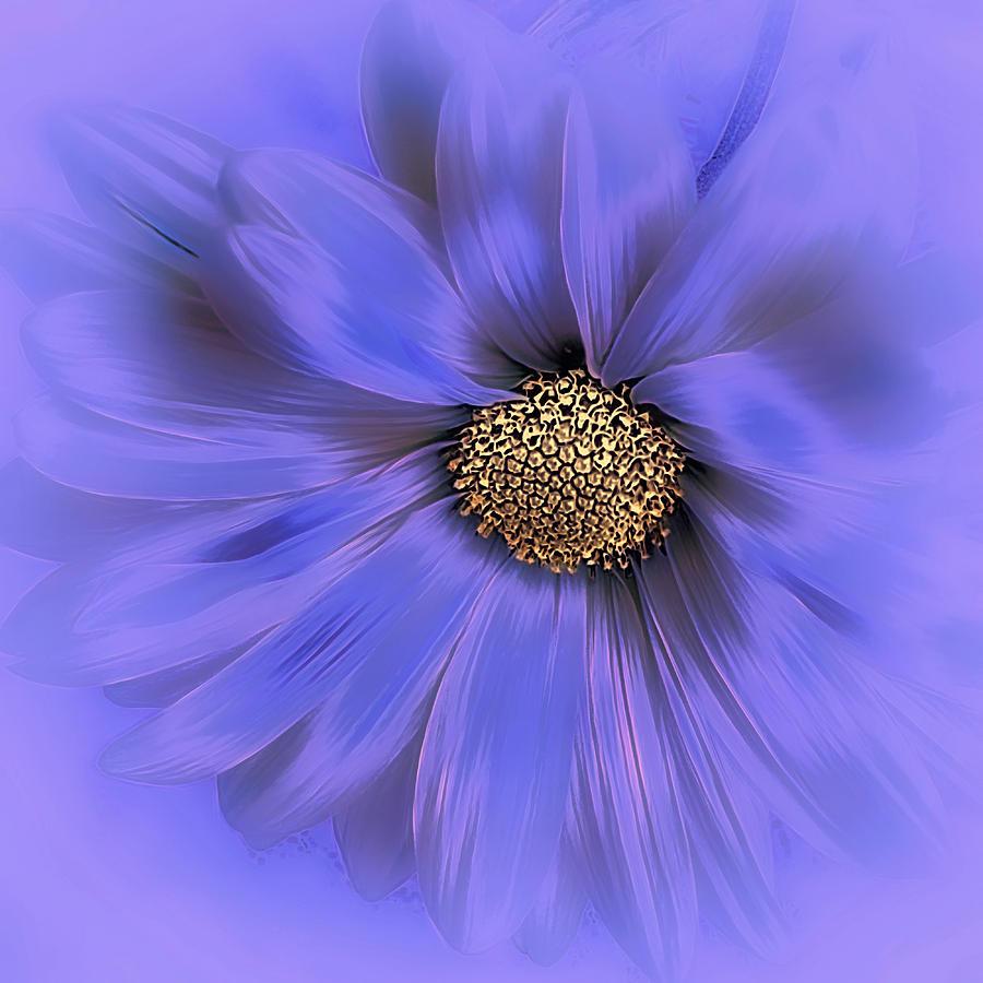 Misty Blue Photograph By Darlene Kwiatkowski