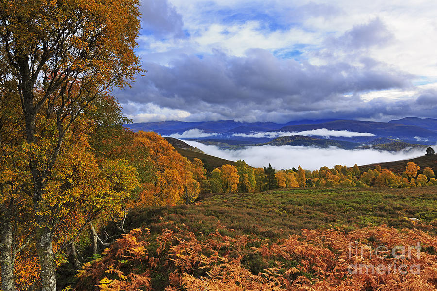 Misty Photograph - Misty Day In The Cairngorms II by Louise Heusinkveld