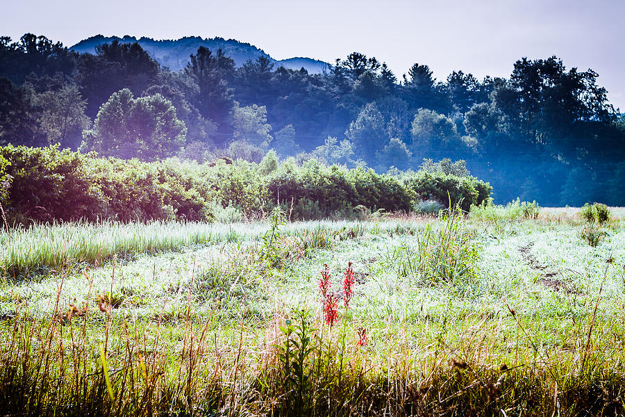 Misty Field in Blue Ridge Mountain Farmlands by Mela Luna