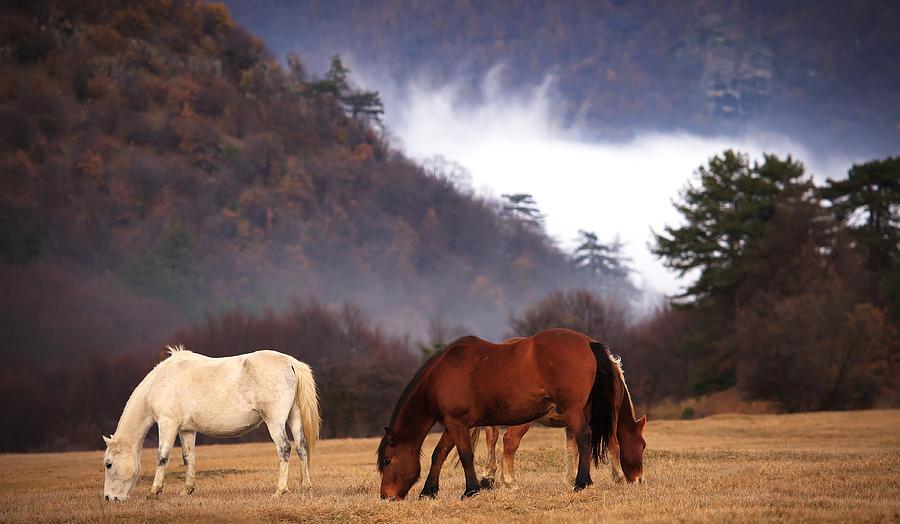 Background Photograph - Misty Forest  by Svetoslav Sokolov