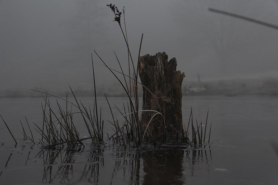 Misty heath Photograph by Middelveld