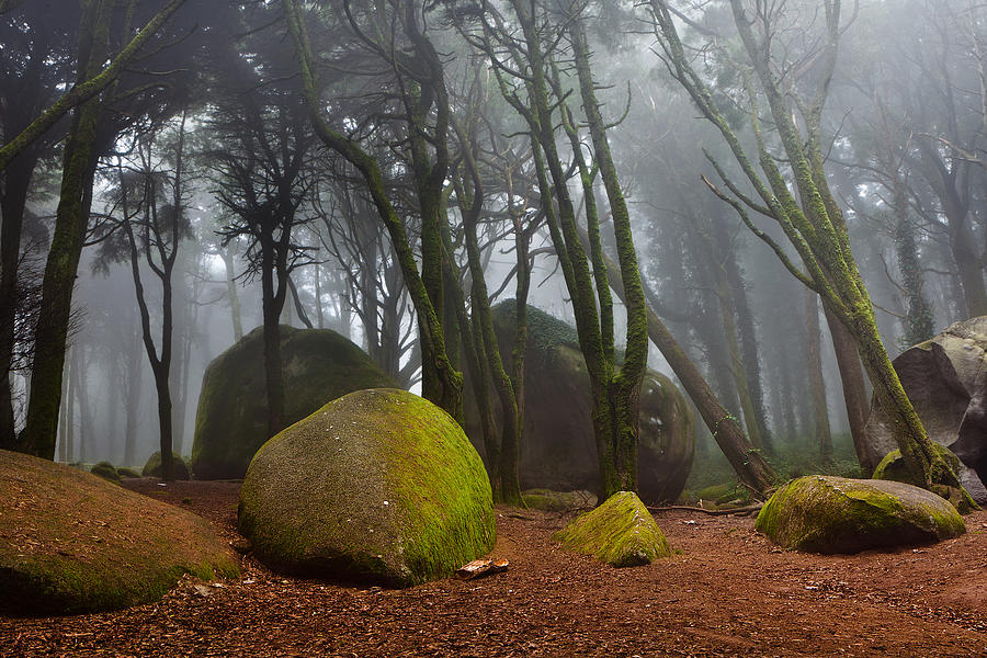Nature Photograph - Misty by Jorge Maia