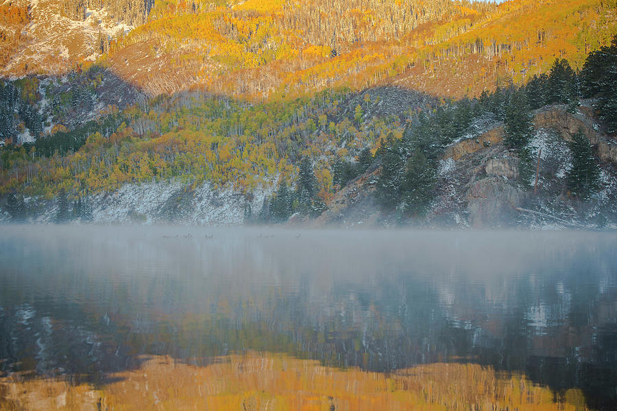 Tree Photograph - Misty Lake With Aspen Trees by Matthewbe Photography