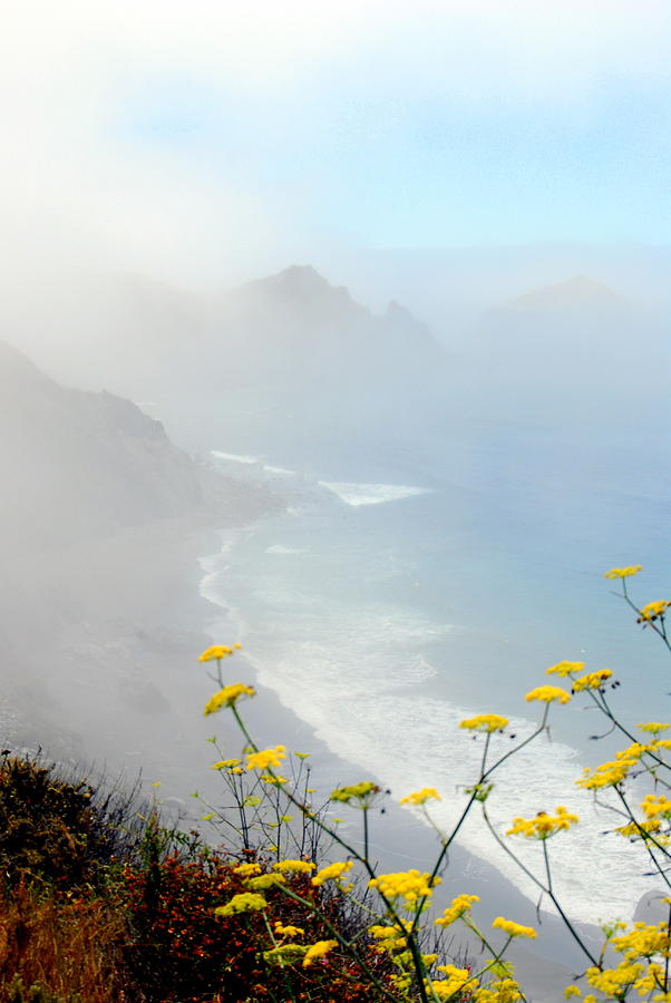 Big Sur Photograph - Misty by Mamie Gunning