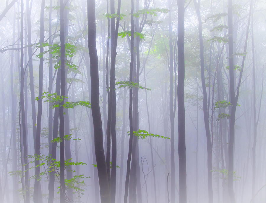 Landscape Photograph - Misty by Michel Manzoni