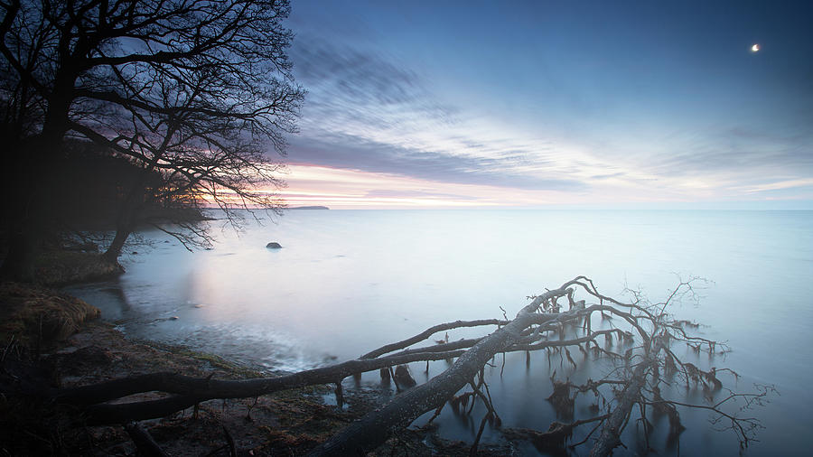 Misty Morning At Baltic Sea With A Dead Photograph by Spreephoto.de