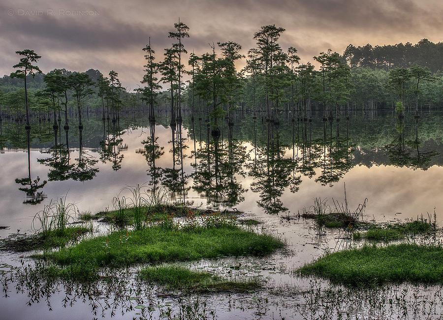 Georgia Photograph - Misty Morning by David R Robinson