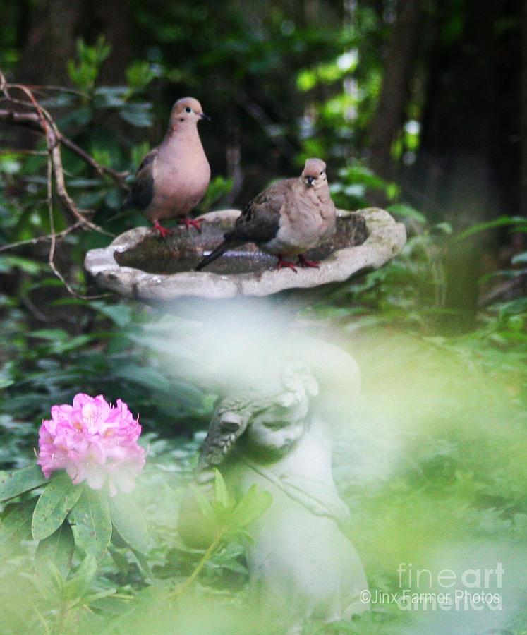Misty Morning Doves Photograph by Jinx Farmer