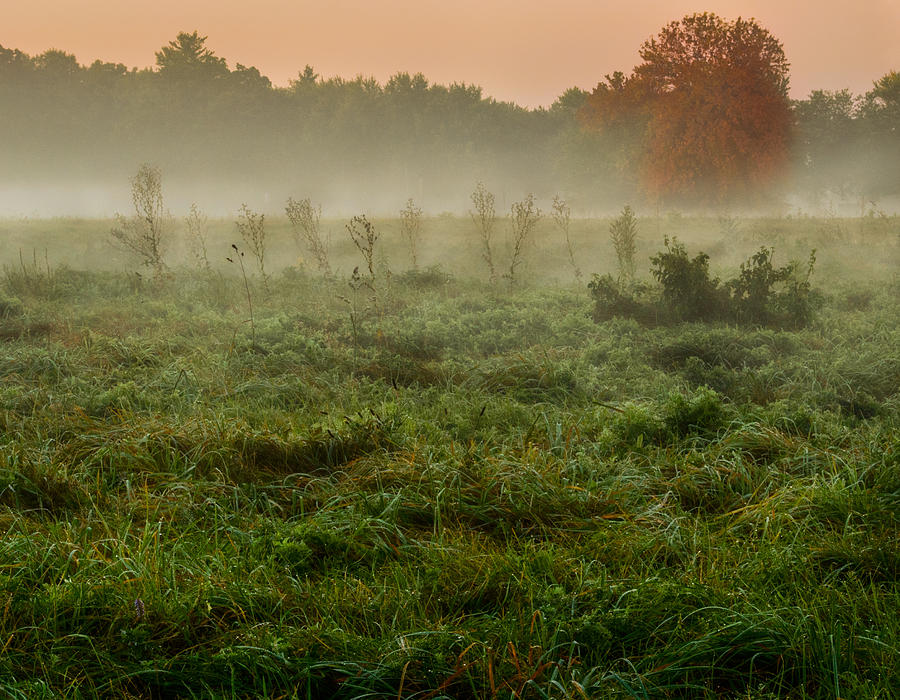 Misty Morning by Garvin Hunter