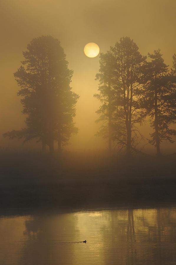 Landscape Photograph - Misty Morning I by Sandy Sisti