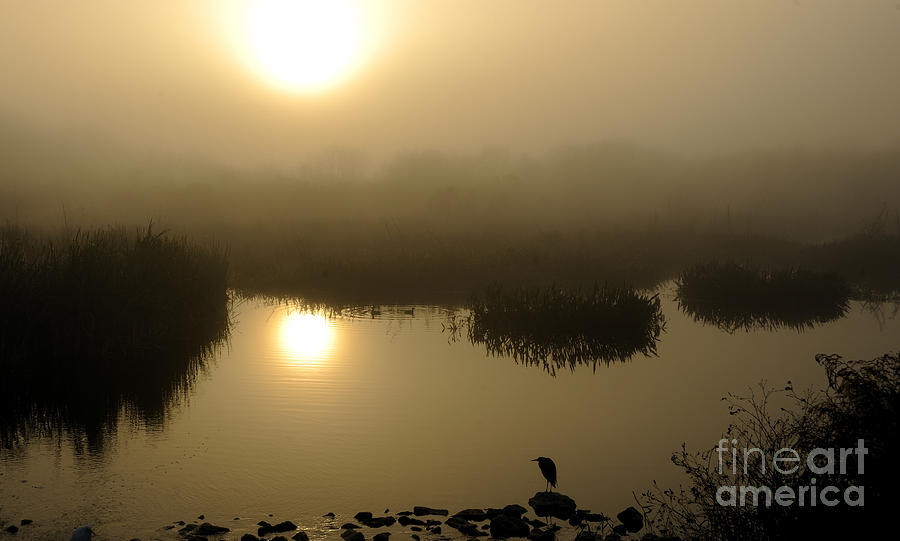 Marsh Photograph - Misty Morning In The Marsh by Nancy Greenland