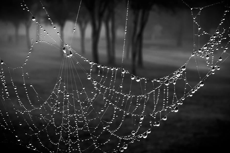 Misty Morning Photograph