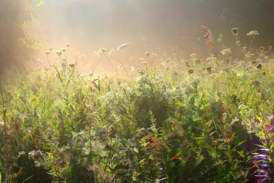 Meadow Photograph - Misty Morning by John Robichaud