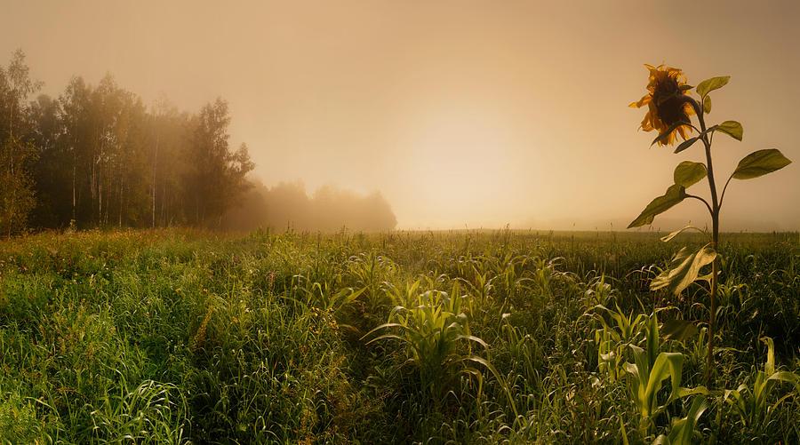 Landscape Photograph - Misty Morning by Julia Shepeleva