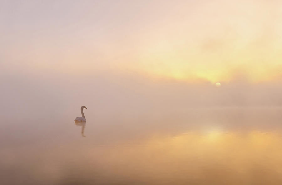 Water Photograph - Misty Morning by Katarzyna Gritzmann