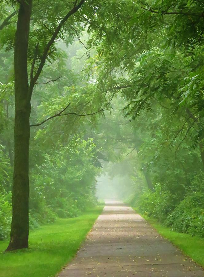 Trees Photograph - Misty Morning by Lori Frisch
