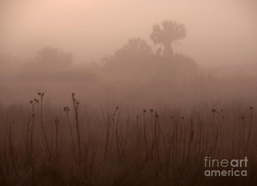 Foggy Photograph - Misty Morning by Roy Thoman