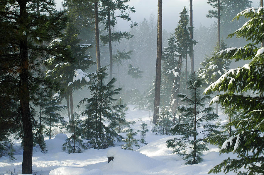Winter Photograph - Misty Morning Snow by Annie Pflueger
